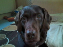 犬バカ日誌 -F1011472.jpg