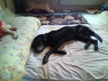犬バカ日誌 -F1011492.jpg