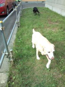 犬バカ日誌 -F1011536.jpg