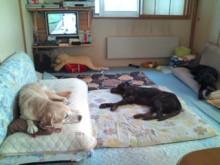 犬バカ日誌 -F1011544.jpg