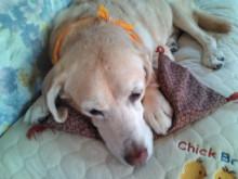 犬バカ日誌 -F1011580.jpg
