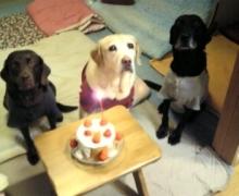 $犬バカ日誌 -2008 れん誕生日