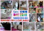 Cats安暖邸ポスター子猫祭り6m差し替え