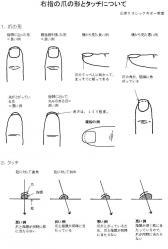 爪の形とタッチ