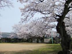 桜-桃園公園