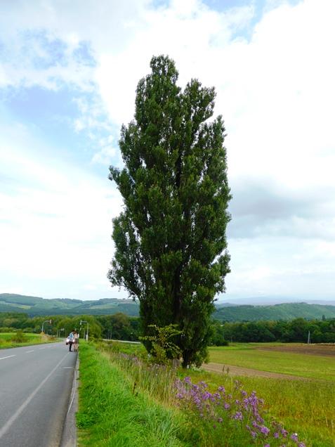 北海道2013・9 ・18~22 (63)
