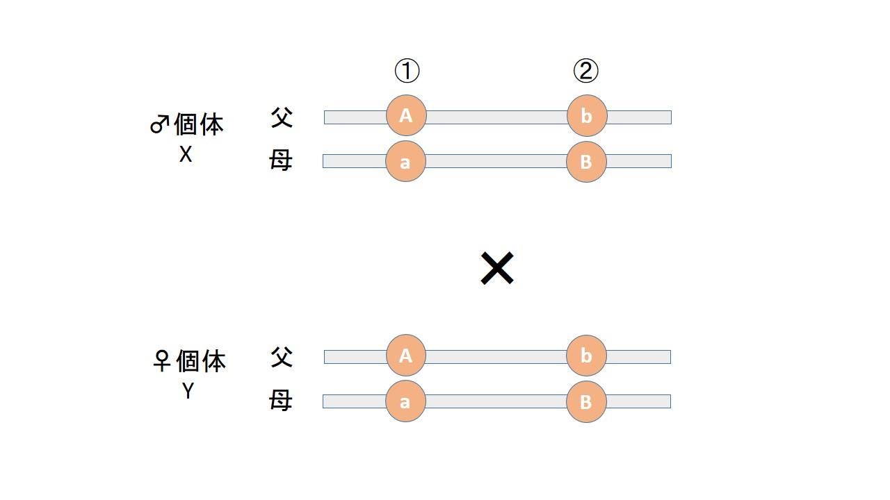 Discus 3