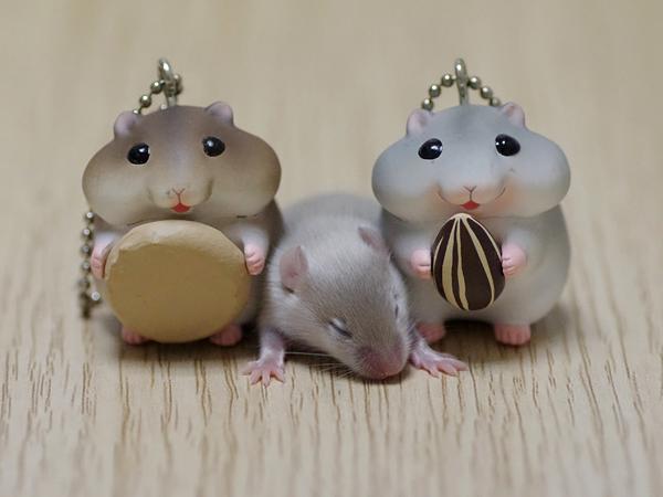 130527ファンシーマウス