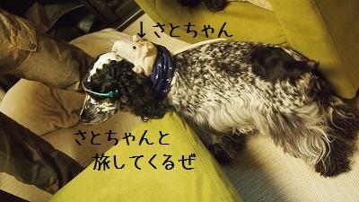 旅犬Duke