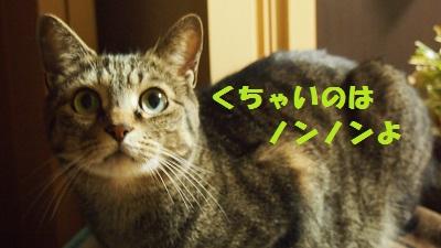 P4253395.jpg