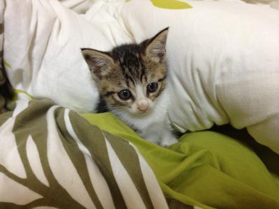 子猫の夏ちゃん