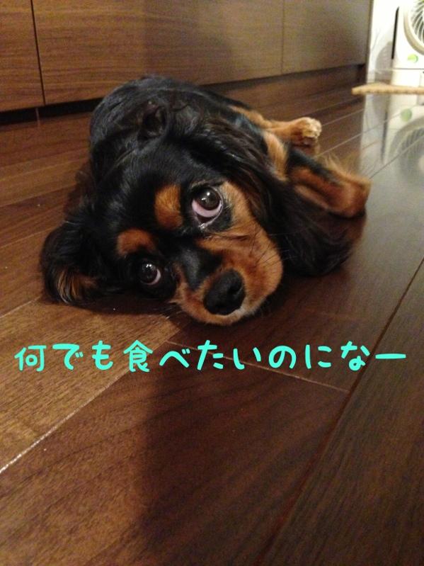 fc2blog_20130910152157f75.jpg