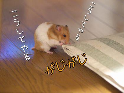 yarikaesu5.jpg