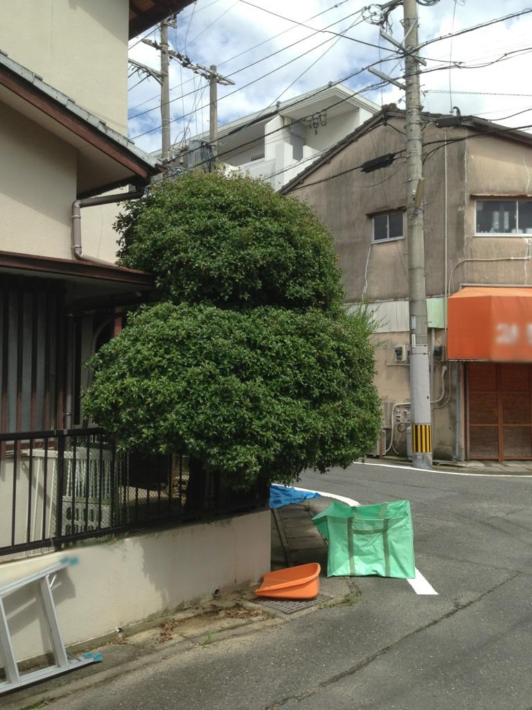 IMG_0767-minamisyo1-flop.jpg