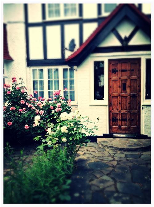 RosestImage5.jpg