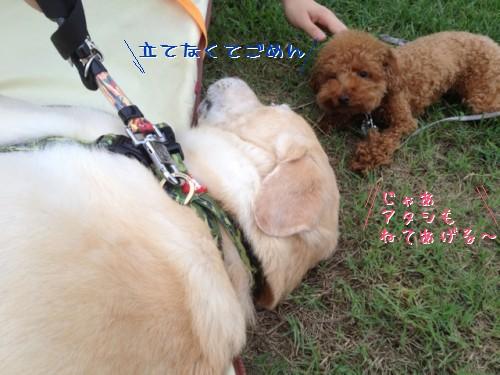 blog3_2013082622034304f.jpg