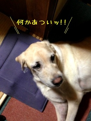 blog6_20131014000206d87.jpg