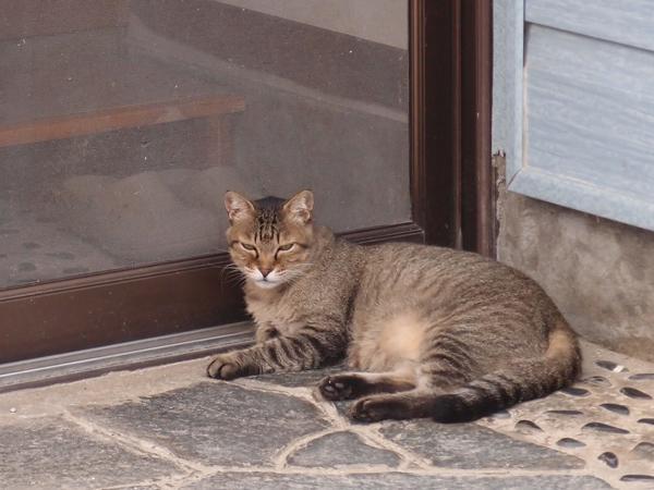 ワイルドすぎる猫