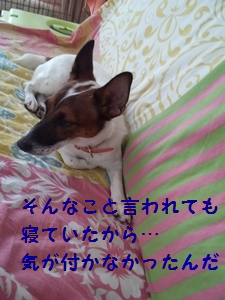 2013101801443981d.jpg