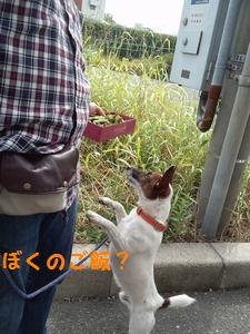 20131019234600bdc.jpg