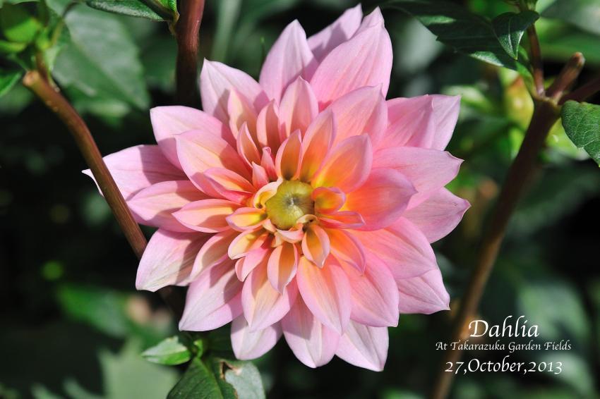 DSC_0936-L_convert_20131030075447.jpg
