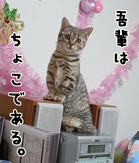IMG_20130503_0040281.jpg