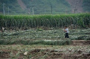 flood-destroys-crops-china.jpg