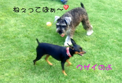 blog_import_51df6b995649b.jpg