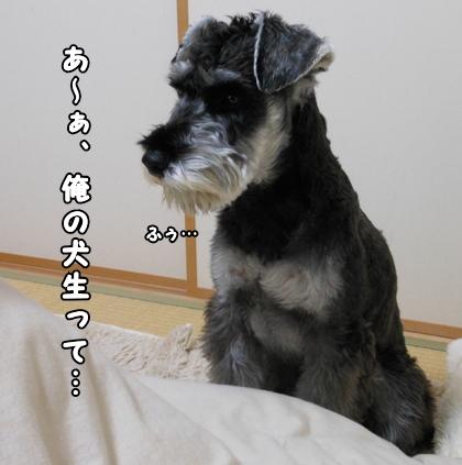 blog_import_51df70e168141.jpg