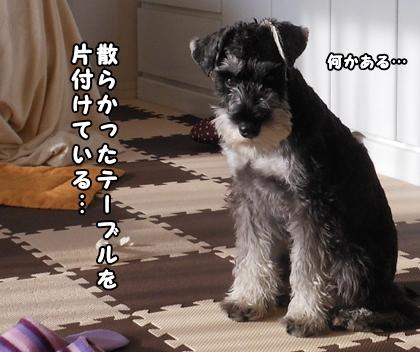 blog_import_51df710badd25.jpg