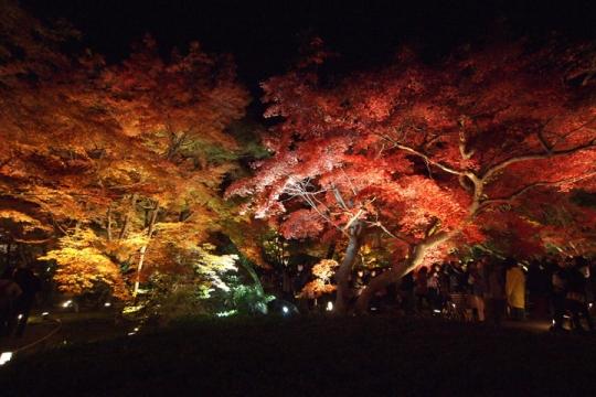 20131124_hogonin_temple-05.jpg