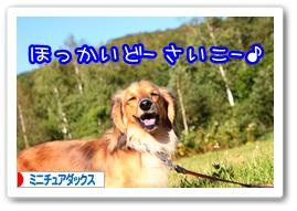 応援ありがとうございますワン!!
