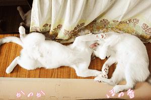 honokanoka-20130522.jpg
