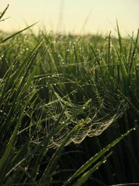 雨のクモの巣