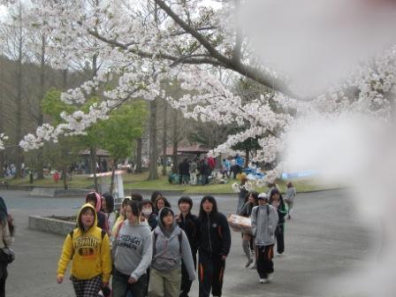 八戸公園でお花見