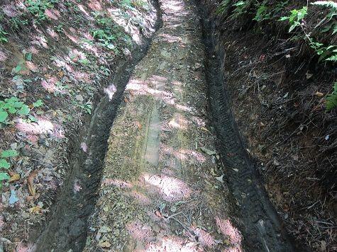 松茸山への道