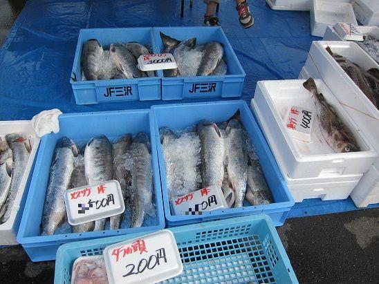 10月6日 八戸鮭