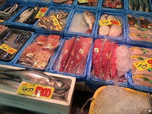 2013年はブリが豊漁