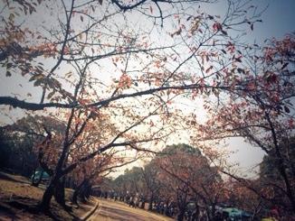 fc2blog_20131117224704fab.jpg