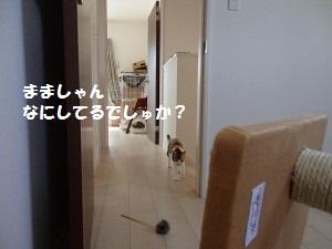 20130505_2.jpg