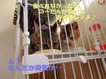 20130523_025.jpg