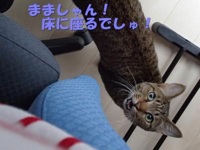 20130602_11.jpg