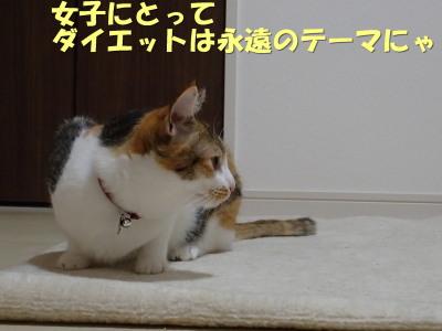 20130612_02.jpg