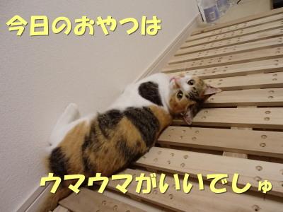 20130618_14.jpg