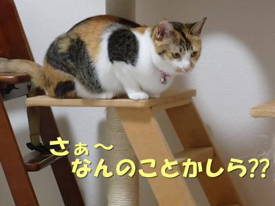 20130626_07.jpg