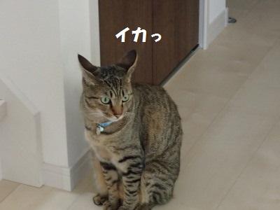 20130630_11.jpg