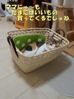20130715_145.jpg