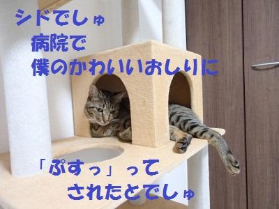 20130806_12.jpg