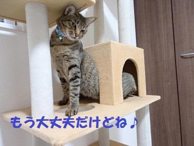 20130806_13.jpg