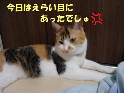 20130806_22.jpg